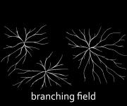 EBREP_Branching Field